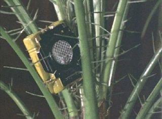 mj-transmitter-02-02.jpg